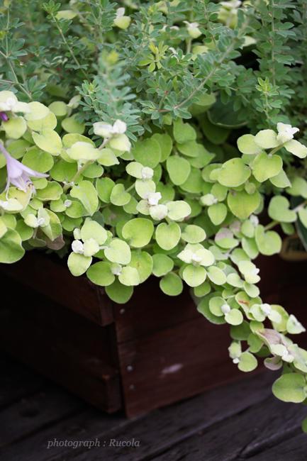 green-yoseue.jpg